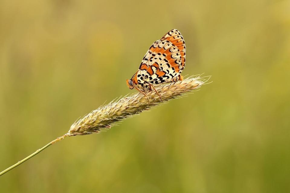 Butterfly-1757511_960_720